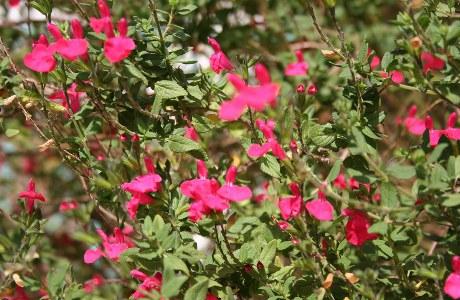 Schöne Blumen am Wegesrand