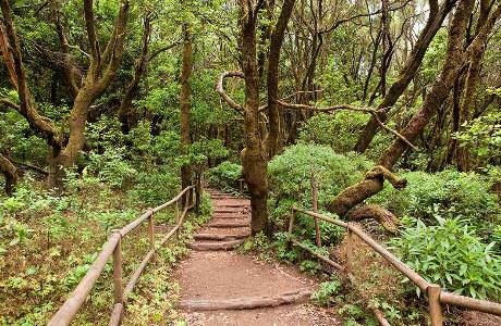 Wanderweg im Garajonay-Nationalpark
