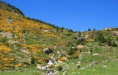 Bergbach im Incles Tal