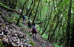 moosbewachsener Lorbeerwald Garajonay-Nationalpark