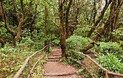 Wanderwege Garajonay-Regenwald