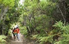Wanderer im Wald durch die Berge
