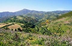 Blick auf die Natur bei O Cebreiro