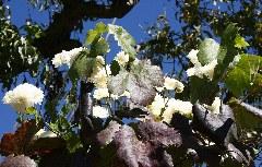 Farbenfroher Baum am Wegesrand