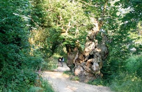 Jakobsweg kurz hinter Sarria