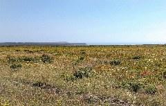 Blick auf das Kap San Vicente